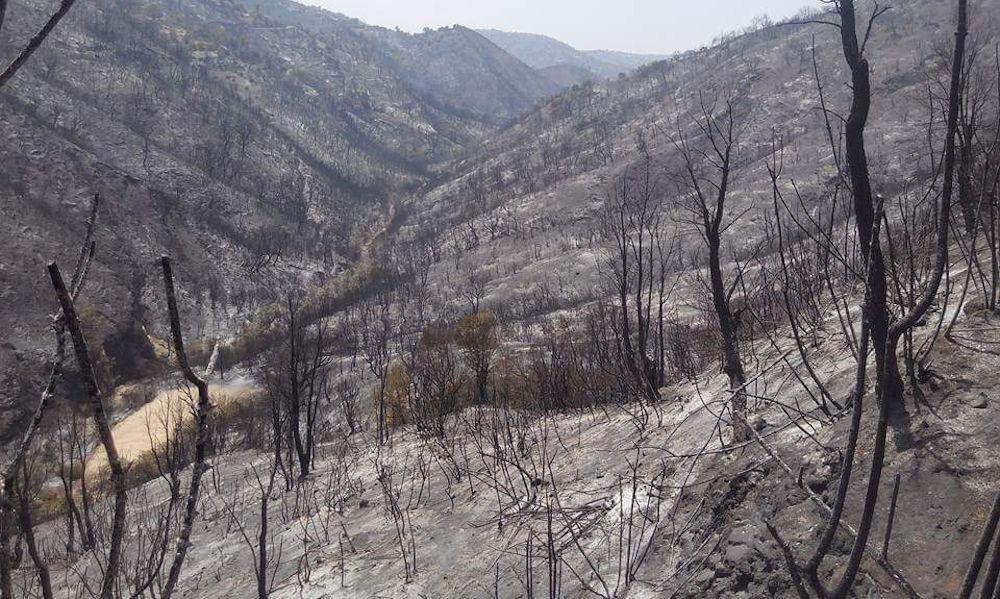 Karim Achab : Le temps est au reboisement et à la construction de la Kabylie