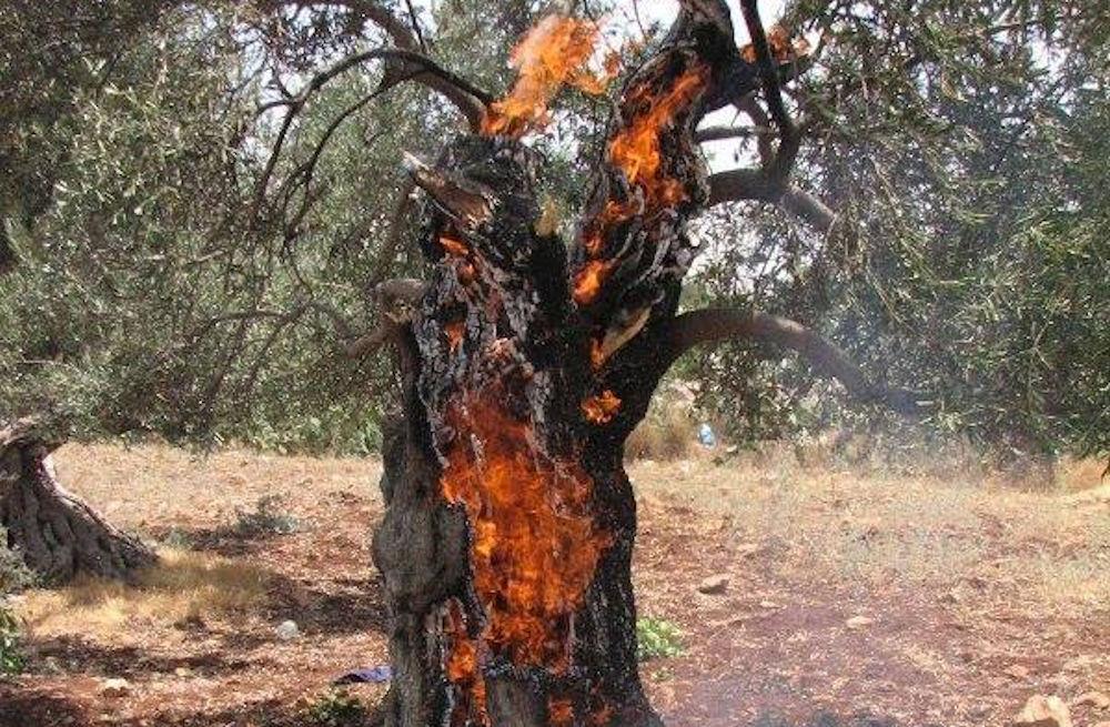 Aucun pseudo-dédommagement de nature coloniale ne saura réparer ce massacre écologique