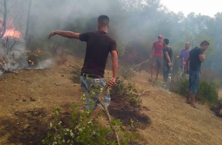 Makouda : Quelques 700 oliviers victimes d'un incendie ravageur