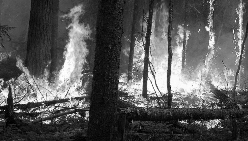 Le feu dans l'histoire de la Kabylie : une arme de guerre qui ne dit pas son nom