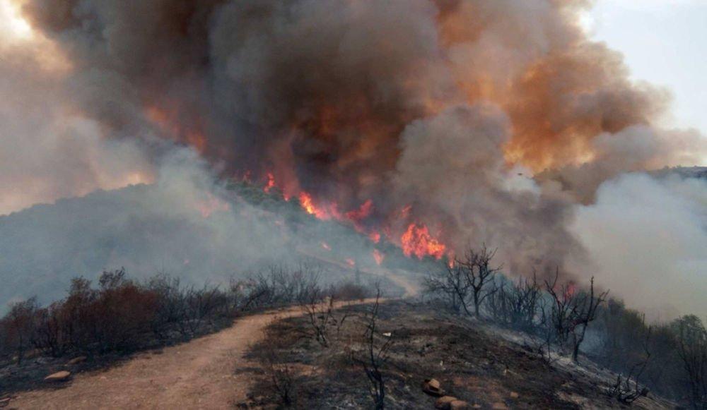 Incendie à Aïn Zouia : des dizaines d'hectares dévorés par les flammes à Boumahni