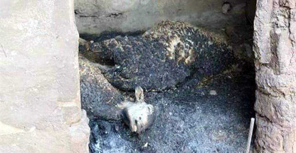 Incendies : nuit d'enfer à Maâlla et à Tigzirt