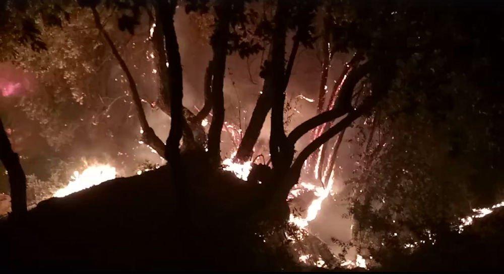 Aghribs : la vidéo bouleversante d'un incendie qui a envahi le village Tamassit