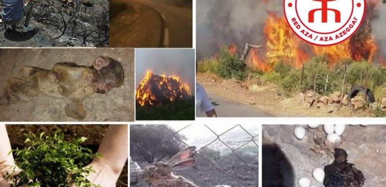 La Kabylie en proie aux incendies : l'Aza-Rouge lance une cagnotte solidaire